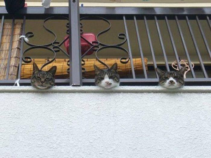 【猫画像】気になる人々