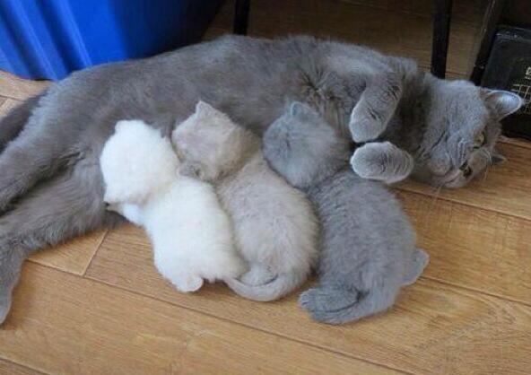 【猫画像】モノクロ親子