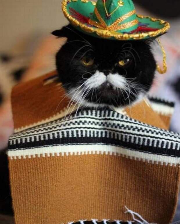 【猫画像】メキシコおじさん