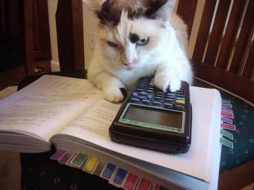 【猫画像】計算が得意!?