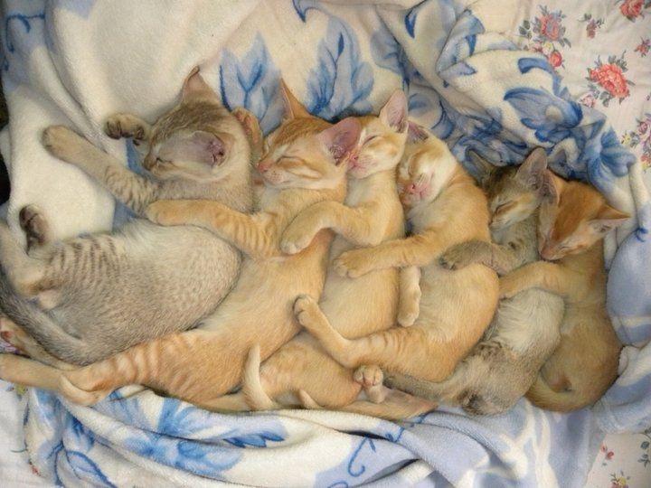 【猫画像】6連!