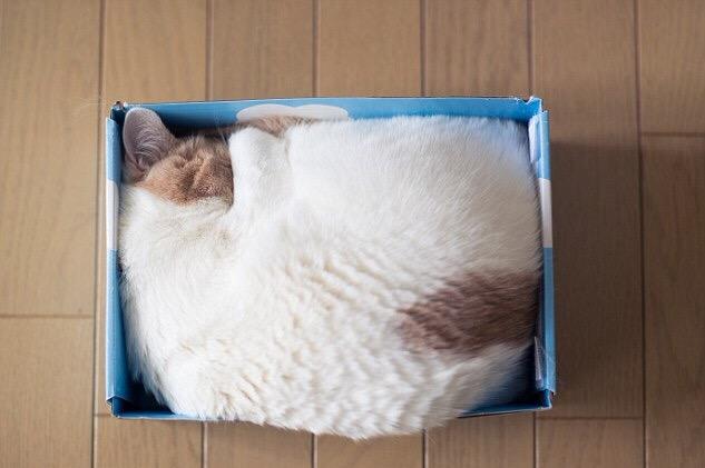 【猫画像】ピッタリ!!