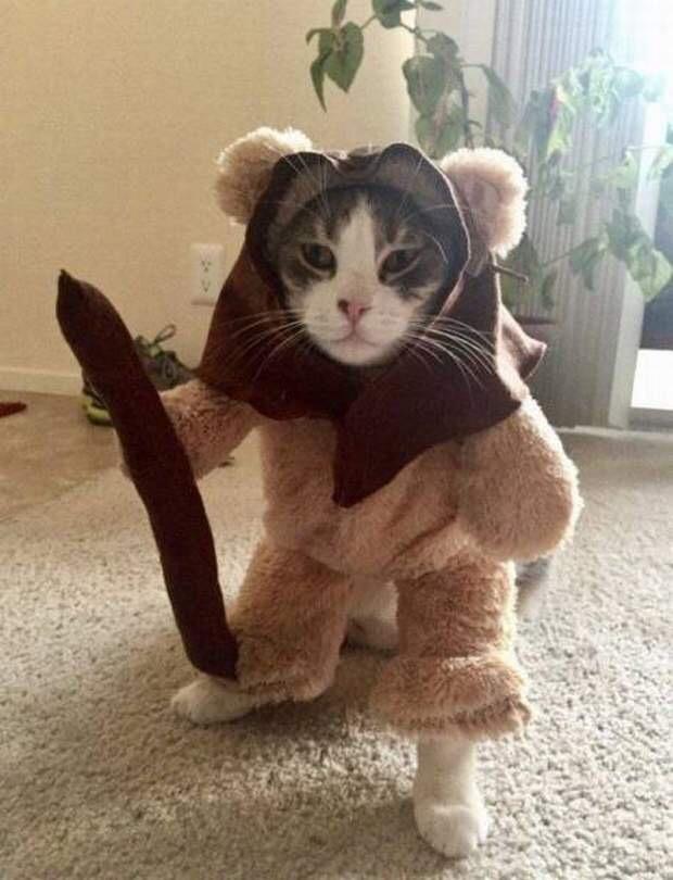 【猫画像】猫(?)があらわれた