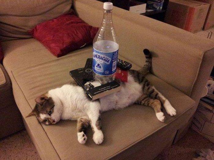【猫画像】猫テーブル