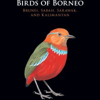 Bird Book Gift Ideas for the Holidays!