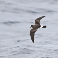 Freeport Pelagic: Birds with Friends