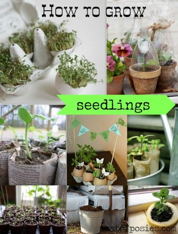 How to grow Seedlings