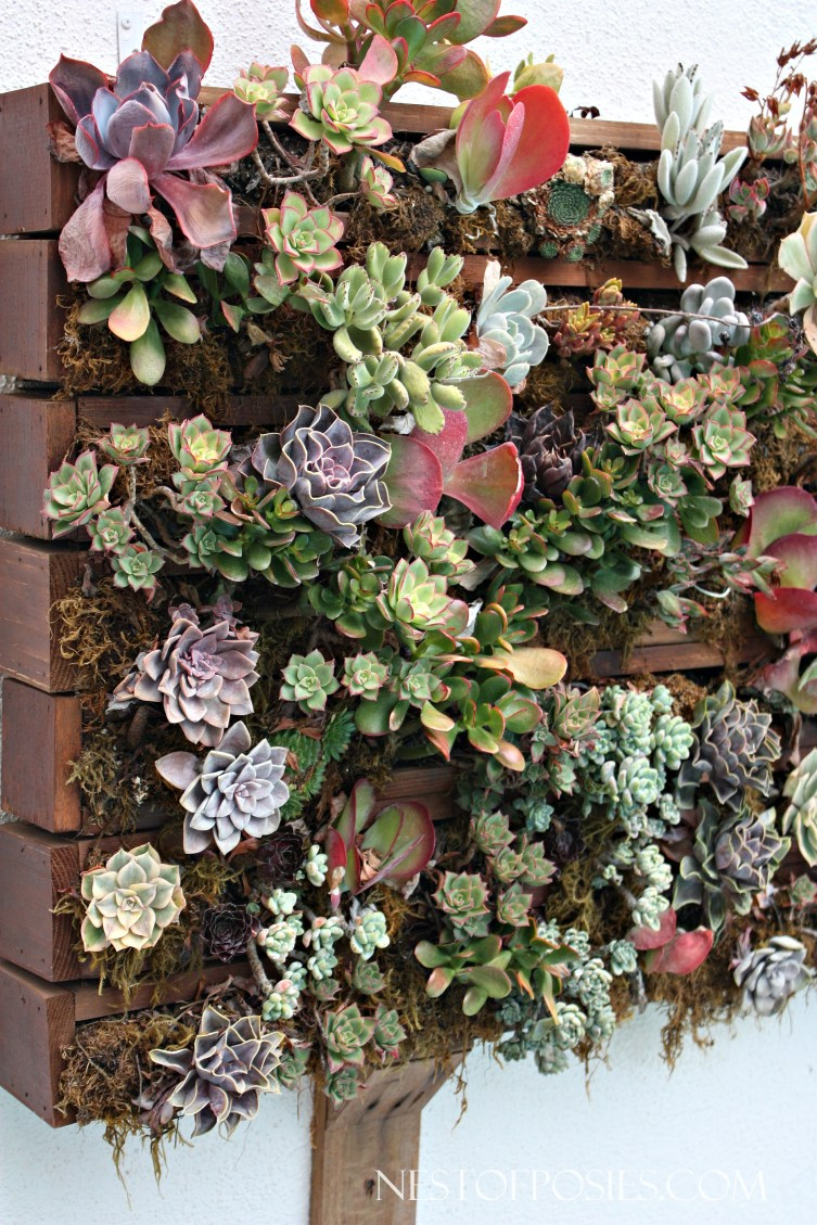 Succulent Garden out of reclaimed Pallet Wood