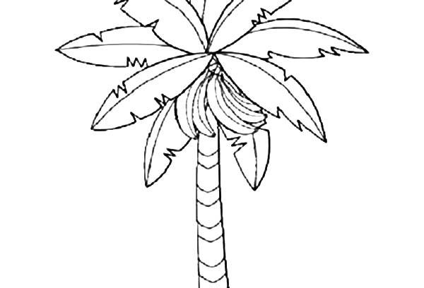 Banana Tree Clipart Clipground
