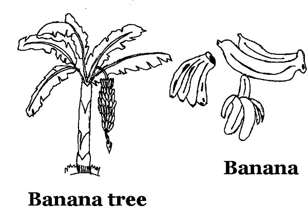 Coloring Pages Banana
