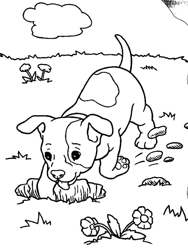 Chihuahua Dog Digging a Hole Coloring Pages - NetArt - best of coloring pages baby dog