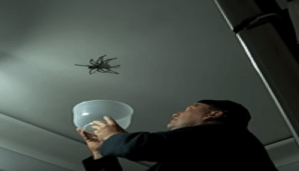 Can you dare to catch a giant spider. Wait and have a look at this. This is really scary!!!