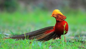 Here are the most amazing beautiful birds in the world that will compel you to say WOW!!!