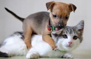 Pets are family: Opt a petplan for pet insurance in USA