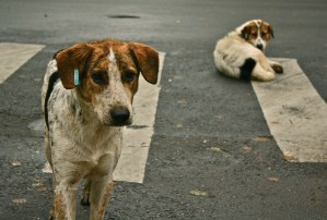 Learning could be achieved from anyone…Even stray dogs can teach us something really useful!!!