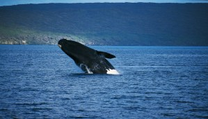 These amazing facts about blue whales will leave you bewildered!!!