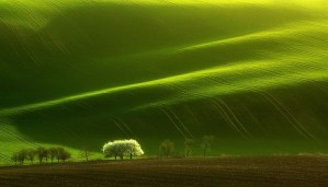 These hypnotizing Moravian fields are must visit to get the most beautiful experience of life!!!
