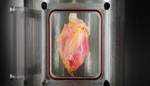 Heart can be Grown outside the Human Body! Amazing!!!