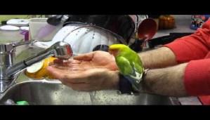 Enjoy trending video of cute bird taking bath!