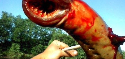 terrifying-sea-lamprey