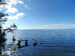 Wild Bird Sanctuary, Florida Keys