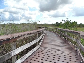 Anhinga Trail, Everglades