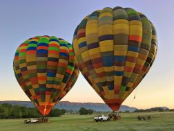 Bill Harrop's Ballon Safari