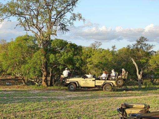 Game Drive, Tintswalo Safari Lodge