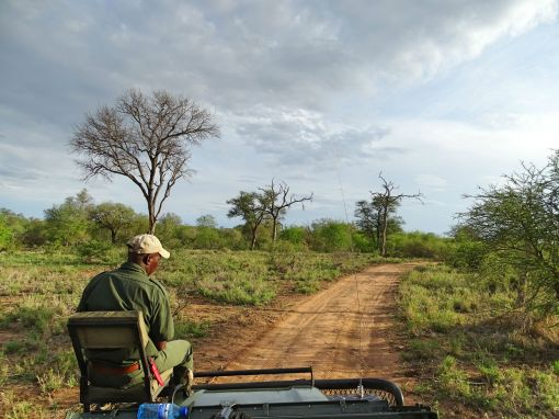 Game Drive bei Africa on Foot