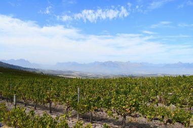 Jordan Wine Estate