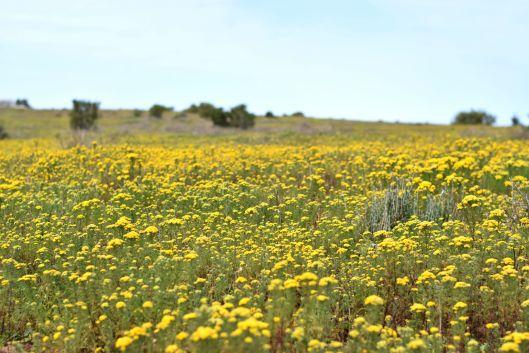 Blütezeit im West Coast National Park