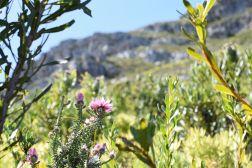 Blütezeit in Südafrika