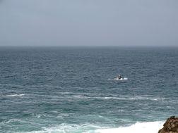 Walbeobachtung von Land aus