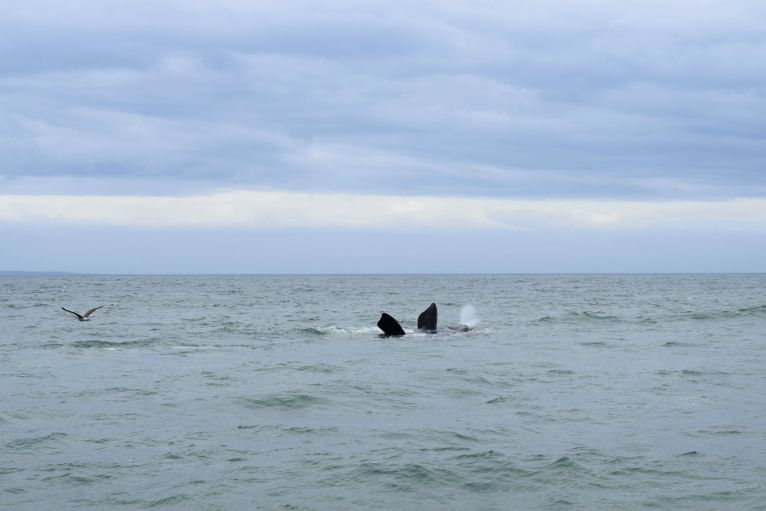 Whale Watching Tour in Hermanus