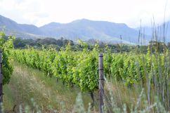Steenberg Wine Farm