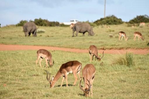 Tierbeobachtung im Gondwana Game Reserve