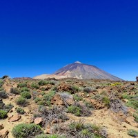 Tenerife with Kids Part 1 - Loro Parque and Teide National Park
