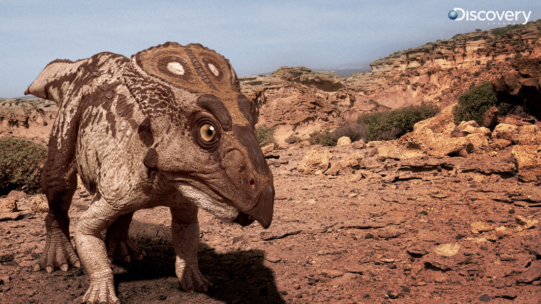 Walking With Dinosaurs 3d Wallpaper Protoceratops Facts And Pictures