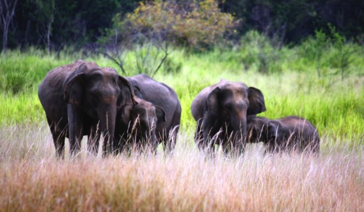 elephants in a national park