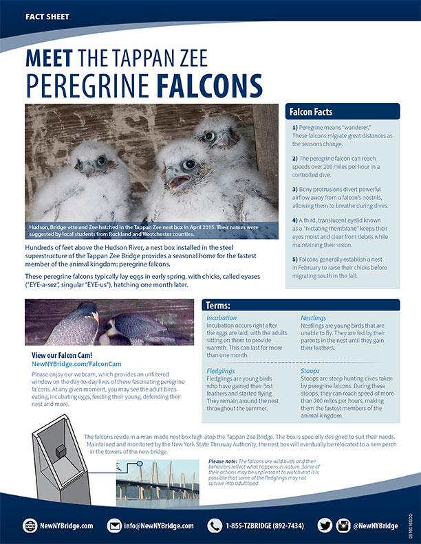 Tappan Zee Falcons
