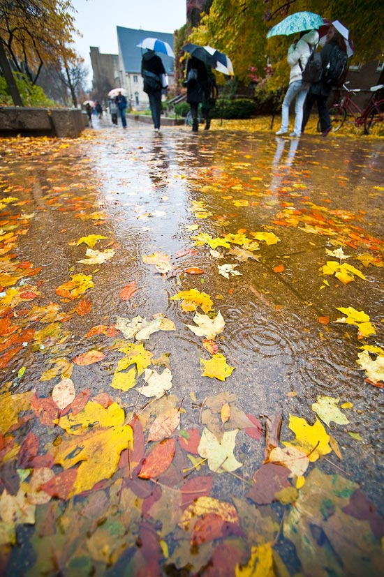 Wallpaper Leaves Falling Recent Sightings Rainy Day
