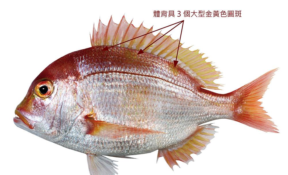 立刻升級買魚高手 臺灣721種水產圖鑑線上看 - 上下游News&Market新聞市集