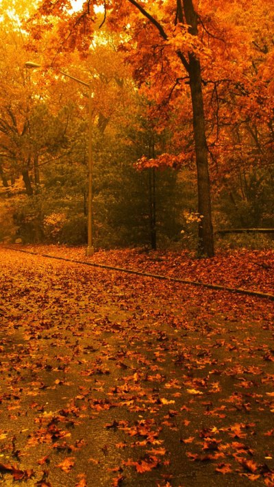 28 Breath-Taking and Most Beautiful Fall Wallpaper for ...