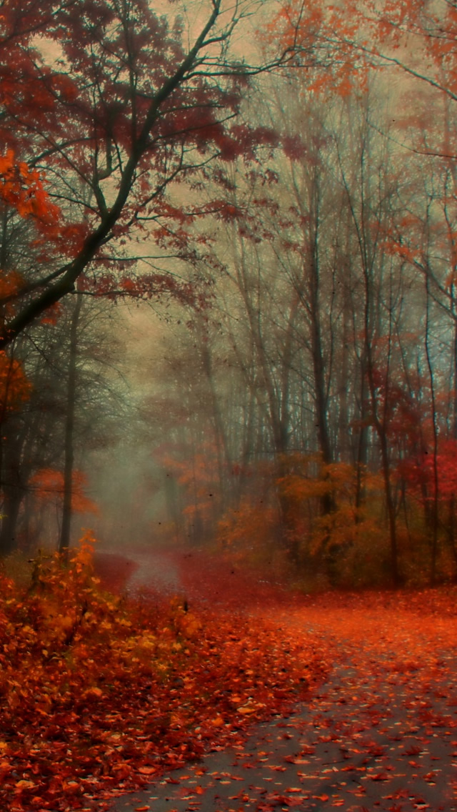 Free Fall Wallpapers For My Phone 28 Breath Taking And Most Beautiful Fall Wallpaper For