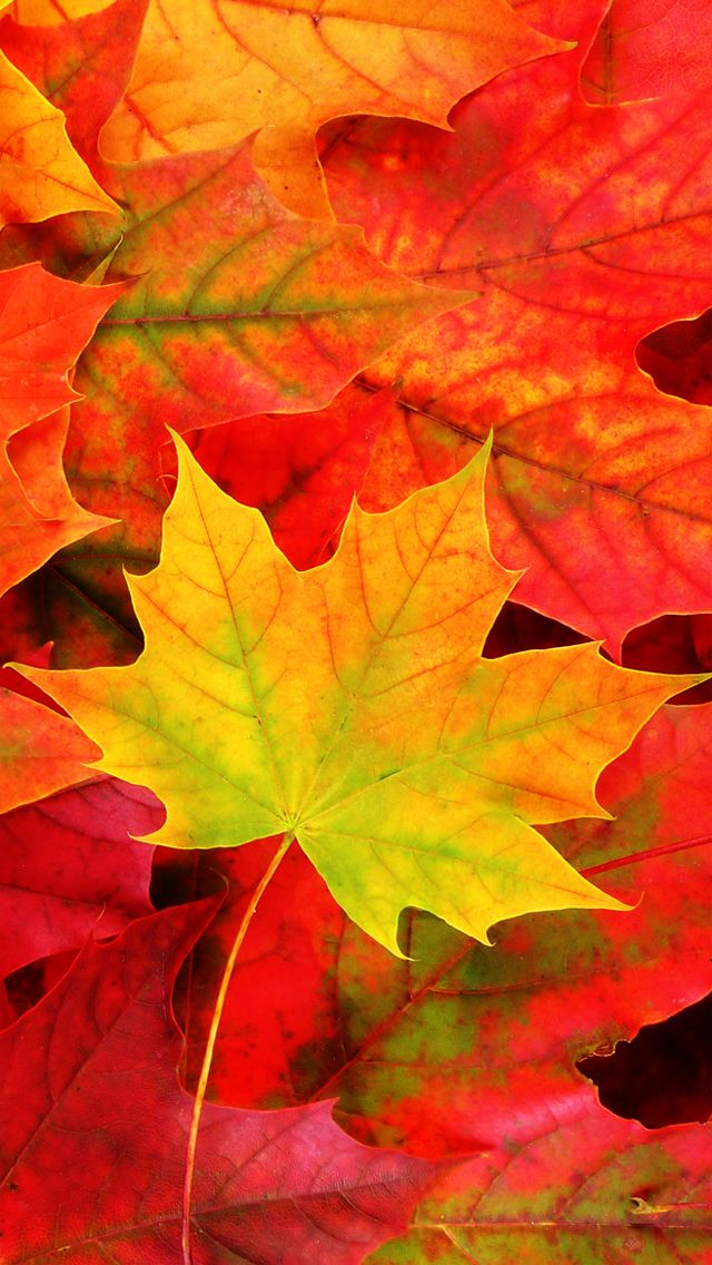 Iphone 5c Fall Wallpaper 28 Breath Taking And Most Beautiful Fall Wallpaper For