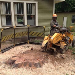Newton Tree Service provides expert stump grinding services.