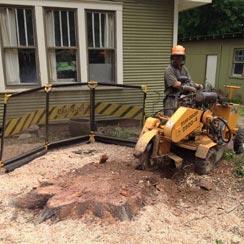 Newton Tree Service provides expert stump grinding services.
