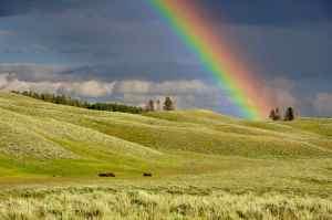 rainbow_opt