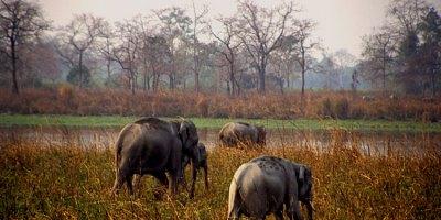 Kaziranga Assam
