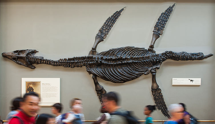 Fossil Marine Reptiles Natural History Museum